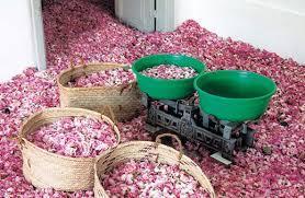Rose Petal Essential Oil