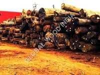 Kapur Round Logs