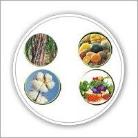 Nitrogen Fixing Biofertilizer