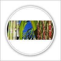 Sugar Zyme Fertilizer