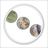 Bio-Fungicide & Pesticides