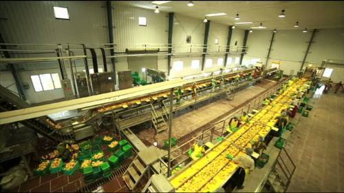 Fruits and Vegetables Processing Projects