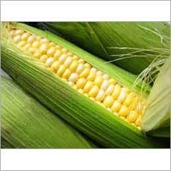 Frozen Sweet Corns