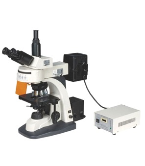 Fluorscent Research Microscopes