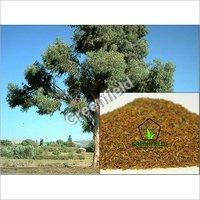 Eucalyptus Seeds (Eucalyptus Coccifera)