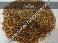 Casuarina Seeds ( Casuarina equisetifolia )