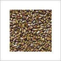 Cassiatora Seeds