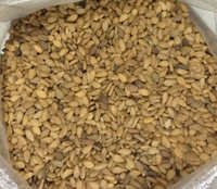NATURAL SESAME SEED (Oil Content)