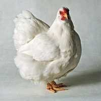 VITABRO PREMIX ( For Broilers )