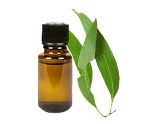 Oil Of Eucalyptus