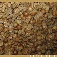 Split Grain Coriander Seeds