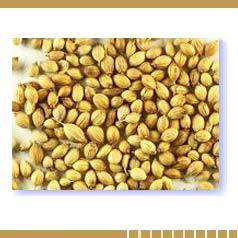Coriandi Seeds