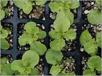 Agro Exfoliated Vermiculite