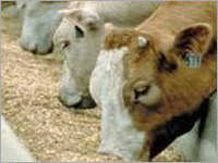 Animal Feed Exfoliated Vermiculite