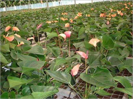 Vermiculite Horticulture Material