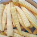 Baby Corn Seeds