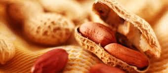 BEST SELLER OF HASTY NUT (peanut)
