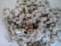 Indian Cotton Seed at Standard Price