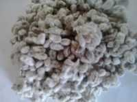 Best Quality Indian Cotton Seed