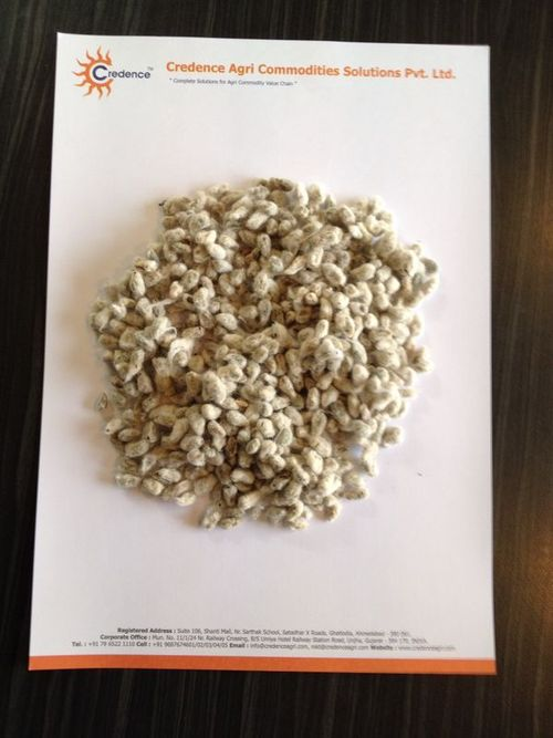 Superb Quality Indian Cotton Seed