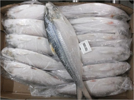 Frozen Fish Export