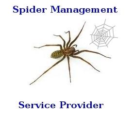 Spider Management Services