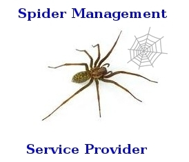 Spider Management Services