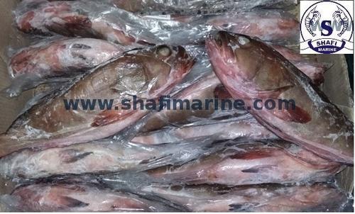 Reef Cod Fish Exporter