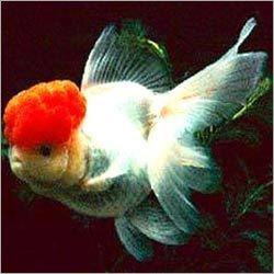 Azad Aquarium & Fortune Fish