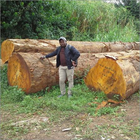 Pine Timber Wood