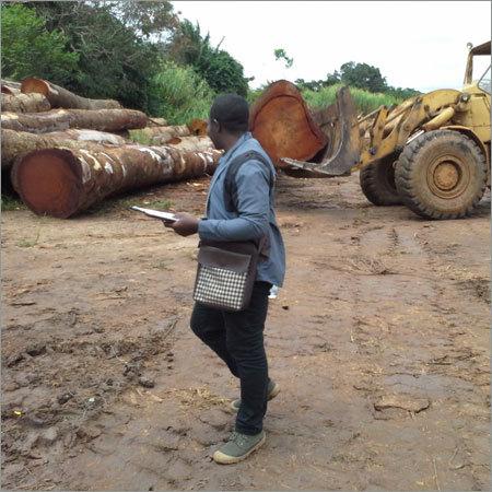 Birch Timber Wood