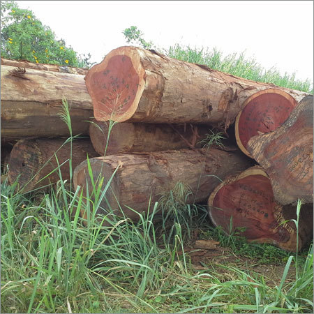 African Timber Wood