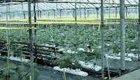 agriculture poly wire