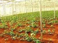 greenhouse polywire