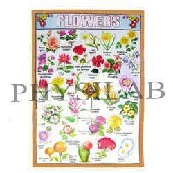Flower Charts