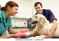 Pharma Pcd  Veterinary in Andhra Pradesh