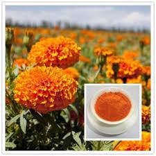 Zeaxanthin 20% powder