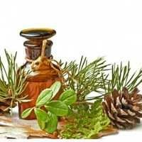 Pine Niddle Oil