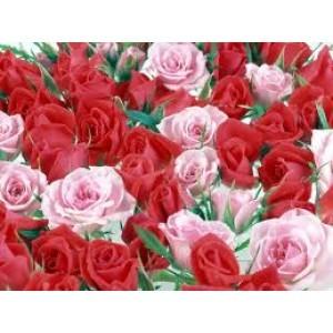 Rose Water Grade D