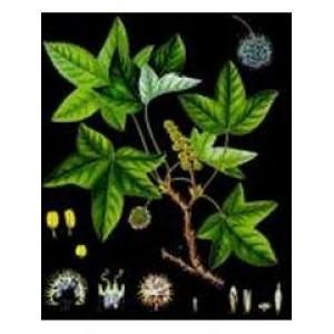 Styrax Tonkinesis Oil (Loban)