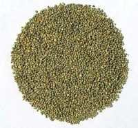 Green Millet From India