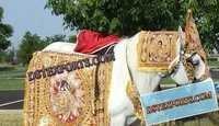 DESIGNER WEDDING HORSE COSTUMES