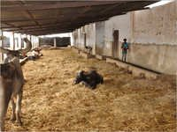 Animal Welfare Organizations