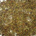 Sesbania Seeds