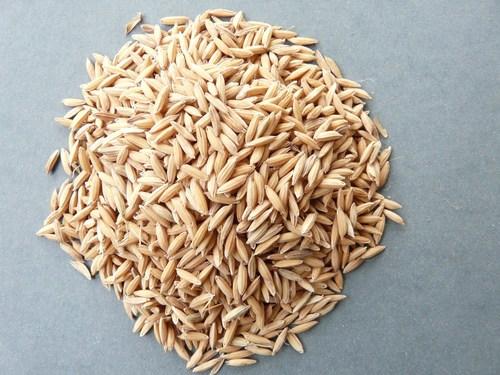 Pusa 2511 Seeds