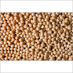 Chick Peas Seeds