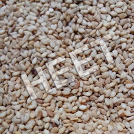 Sesame Seeds Export Quality