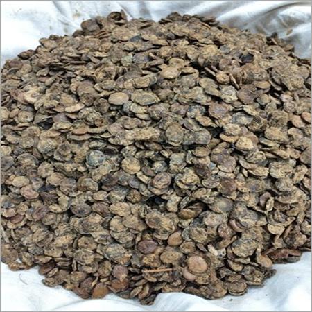 Dry Kumatia