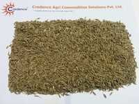 Cumin Seeds From Unjha