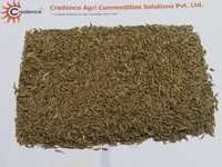 Best Quality Cumin Seeds